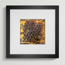 Honeycomb honey sculpture