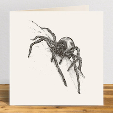 Lace-Weaver Spider Greetings Card